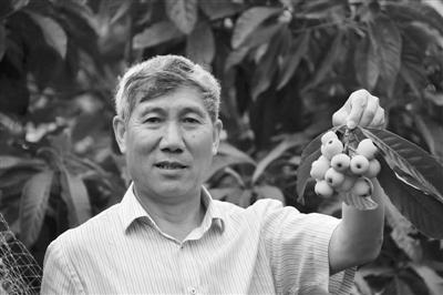 """为了农户不因冻害""""受伤""""他花20年让枇杷春天开花"""
