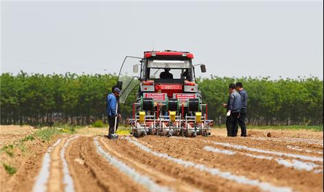 河北南宫:机械化起垄覆膜栽培技术促进棉花增收