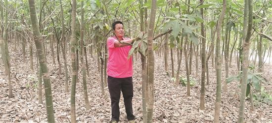 发财树下发大财 绿色产业助奔康