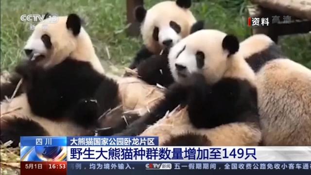 四川卧龙自然保护区有149只野生大熊猫 这个数据是怎么来的?图片