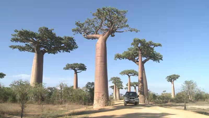 马达加斯加第三次延长国家卫生紧急状态