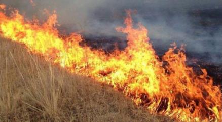 蒙古国东方省发生草原火灾 过火面积达3500公顷