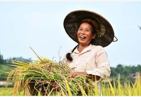 国务院:扩大三大粮食作物完全成本保险和收入保险试点范围