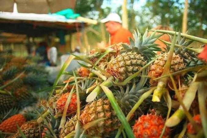 泰国一菠萝加工厂暴发聚集性感染事件