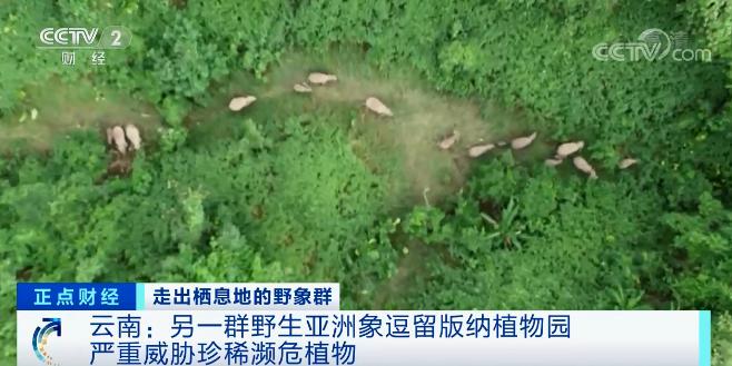 [杏悦]洲象南下为何两个象杏悦群同时出走图片