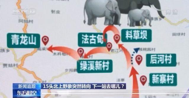 """北上野象走出""""S""""路线 下一站去哪儿?"""