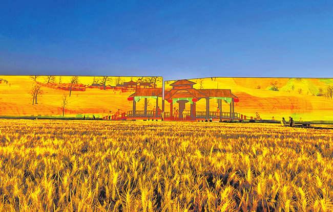 「杏悦」麦子熟了只杏悦有河南城门开图片
