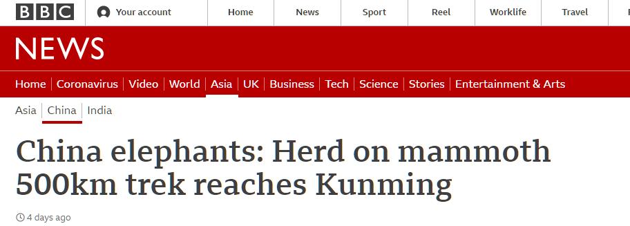"""""""一路象北""""火出中国 多国媒体报道:""""中国野象群正成为国际明星"""""""
