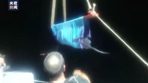浙江台州临海12头搁浅瓜头鲸已全部吊离滩涂 其中两头已在外海放生
