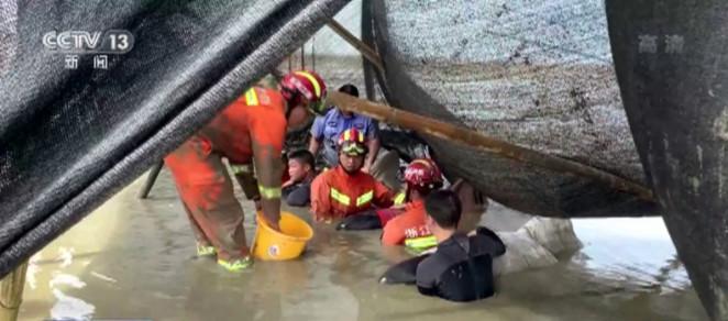 浙江台州多部门联合 成功救起9头瓜头鲸
