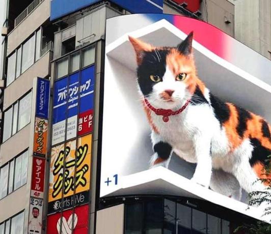 巨型3D猫咪亮相日本东京街头引路人围观