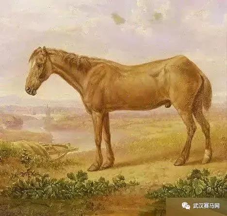 最长寿的马