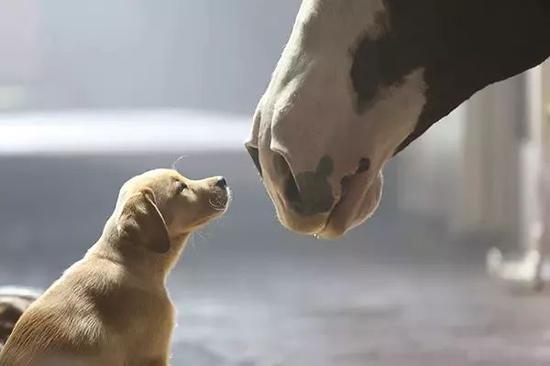 如何让你的马儿保持健康的状态