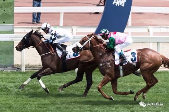 ▲图/Meydan Racing,「艾吉巴尔」(左)