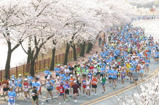 资料图:韩国庆州樱花马拉松比赛(韩媒breaknews)