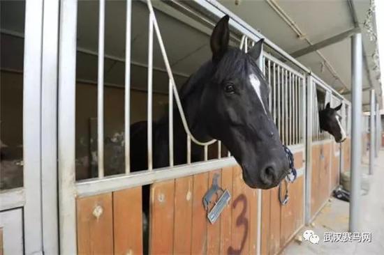 在海关隔离场内的匈牙利赛马