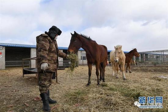2月21日,内蒙古呼和浩特市土默特左旗敕勒川镇三卜树村疫情防控巡逻马队的队员在马厩里喂马。新华社记者 彭源 摄
