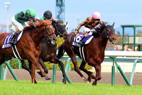 """日本骑师松若风马伙拍""""魔族闪焰""""首尝一级赛胜利"""