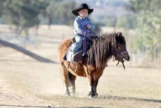 马匹知识之Pony
