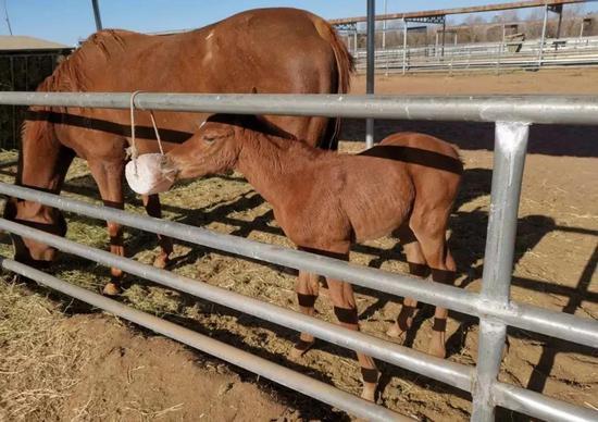 不久前出生的小马驹