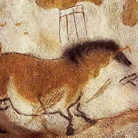 普氏野马(Equus przewalskii)