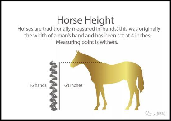 1米63是一匹纯血马的平均高度