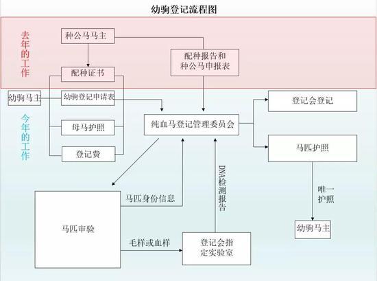幼驹登记流程介绍