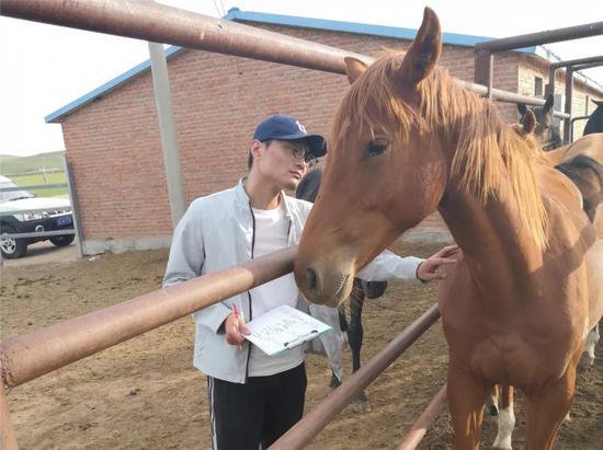 中国马会良种马登记管理委员会在白音锡勒牧场进行登记工作