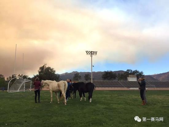 馬踢足球的好處真是太多了,希望能早日開辦馬足世界盃!