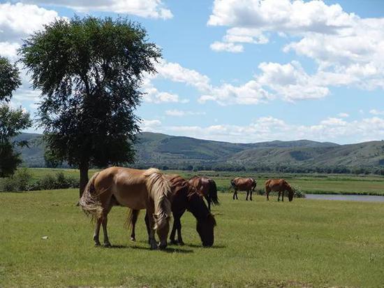 草是马儿健康饮食的关键