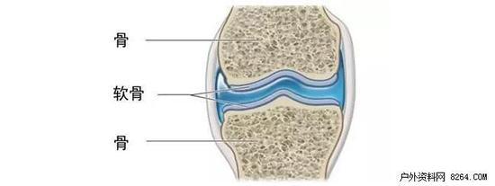 用科学解决你的疑惑 跑步会把膝关节软骨磨没吗