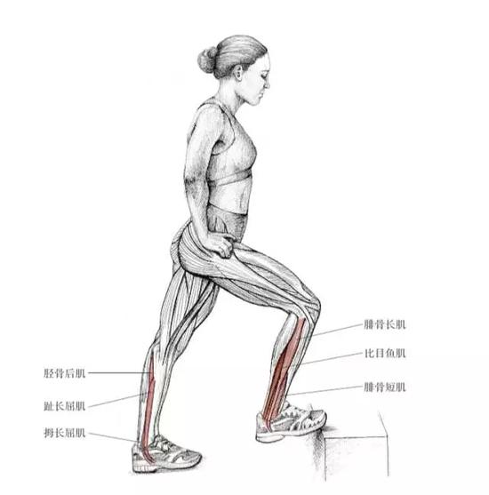 扁平足跑步容易受伤?是因为你这里的肌肉太薄弱