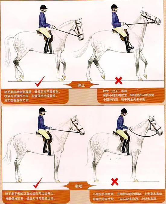 <b>新手骑马,教练说的听不懂怎么办?</b>