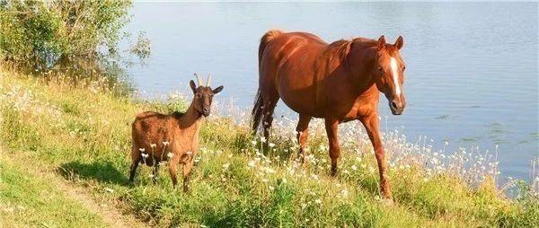 马儿追求一首成长的幼伙伴