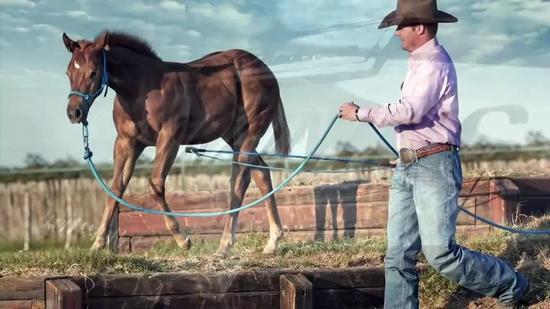 马驹的调训方法