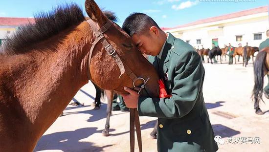 骑兵连退伍老兵与军马告别