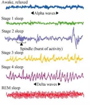 入睡期(可参考上方解析图理解)