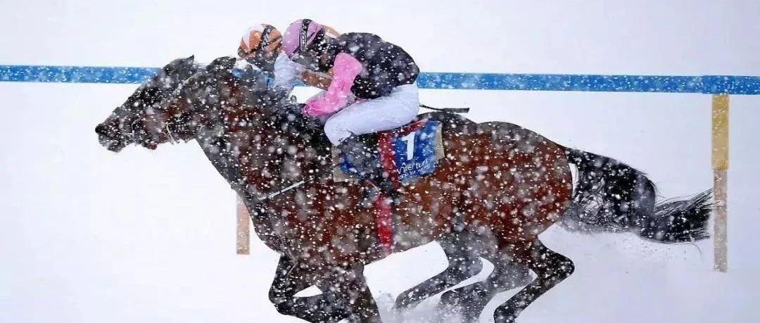 圣莫里茨雪上赛马大会
