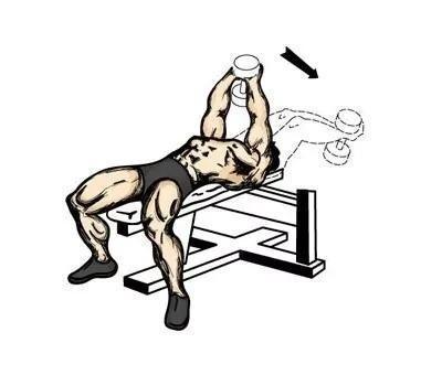训练部位三:背部