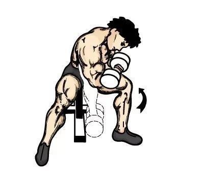 训练部位五:肱三头肌
