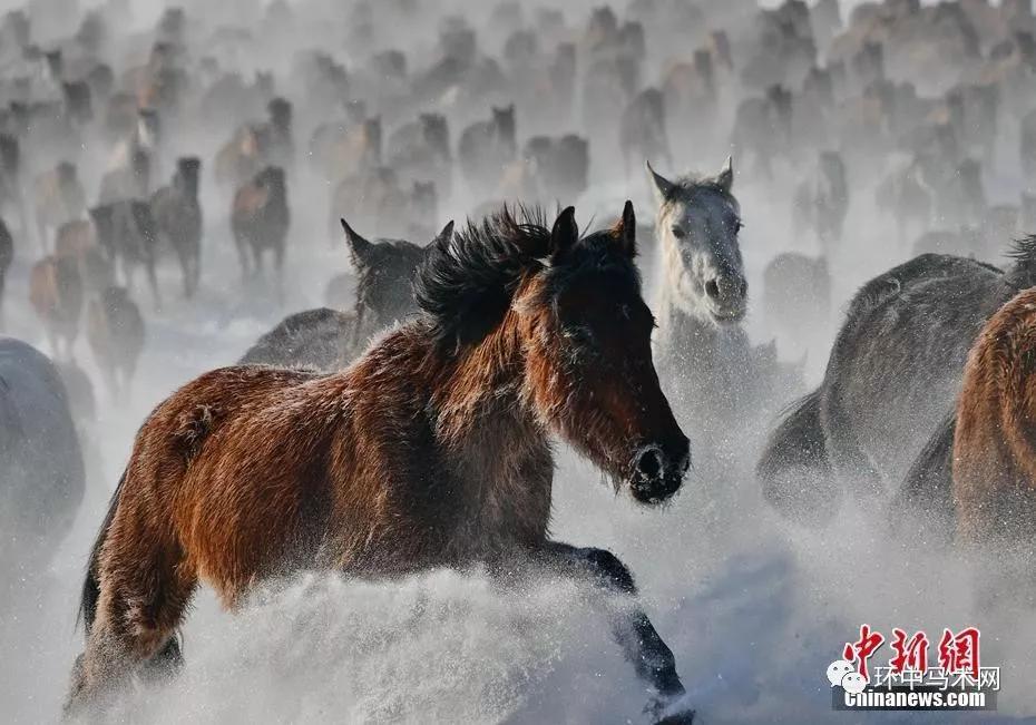 马群奔腾在无垠的雪原上