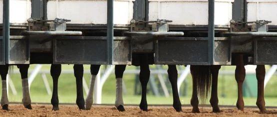 赛马场上出现的绷带(图片源自paulickreport)