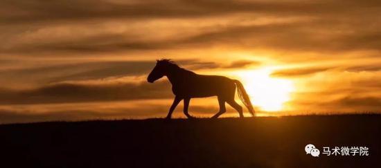 夕阳下的马儿