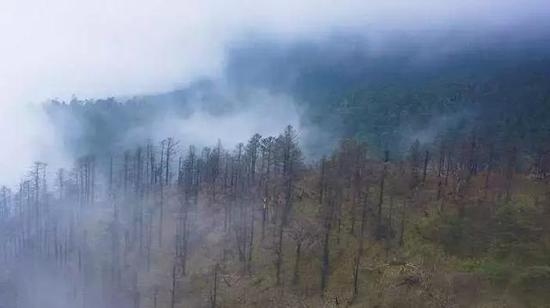 黑竹沟经常泛起浓雾。图/lotour
