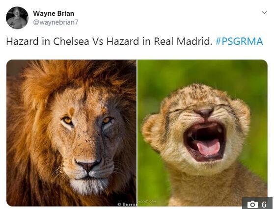 雄狮vs幼狮崽