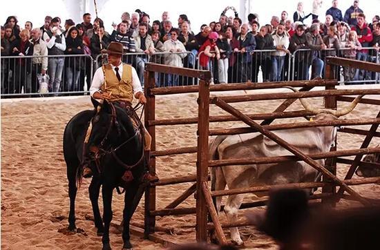 意大利传统的马文化的竟然也有牛仔文化