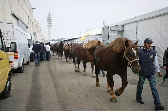 这场最重要的国际展览会今年迎来了60个品种3000匹马