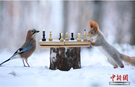 山雀与小松鼠对弈