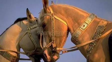 人要衣装马要鞍……
