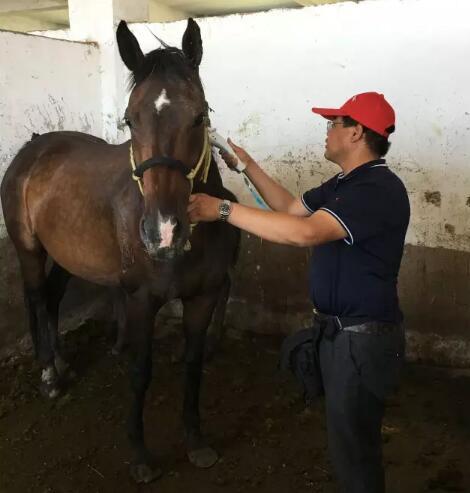 北京慧海国际马业有限公司董事长郭进,对于马匹登记的重要性有十分清晰的认识